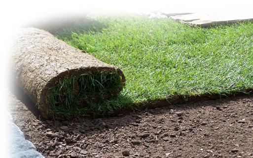 Rollrasen, das schnelle Grün